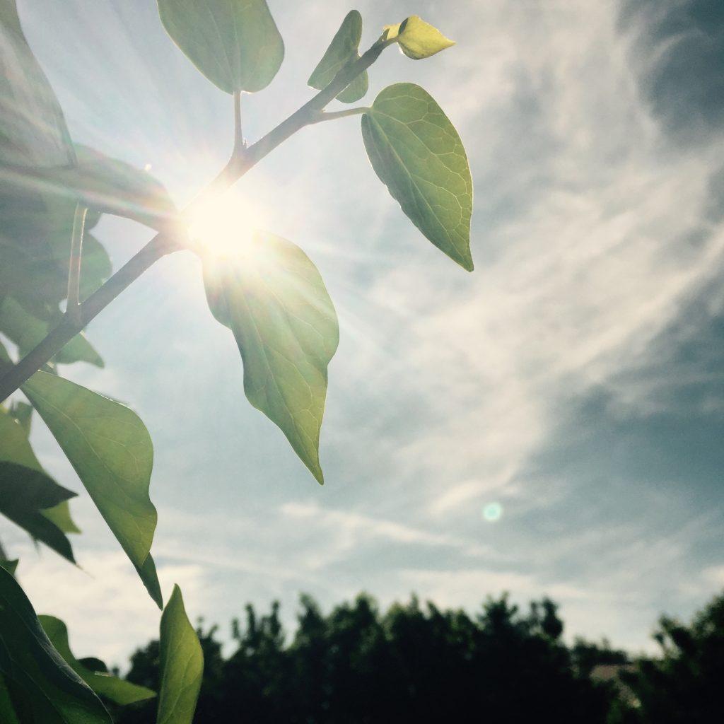 environnement naturel - ciel bleu et feuillage